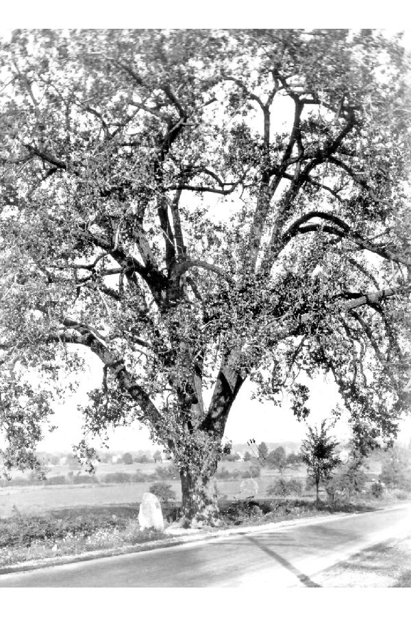 cottonwood 1936