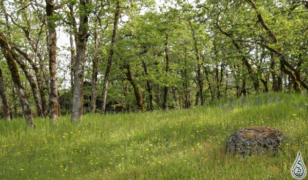 Meadow&Rock