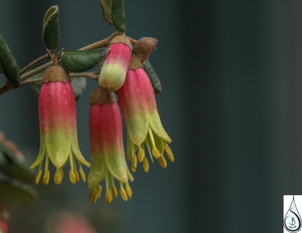 febflowers